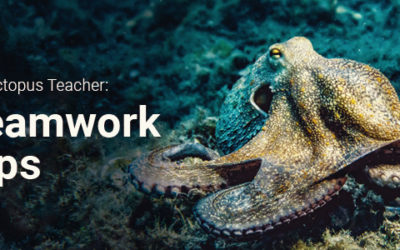 Your Website of the Month: Teamwork Tips from My Octopus Teacher